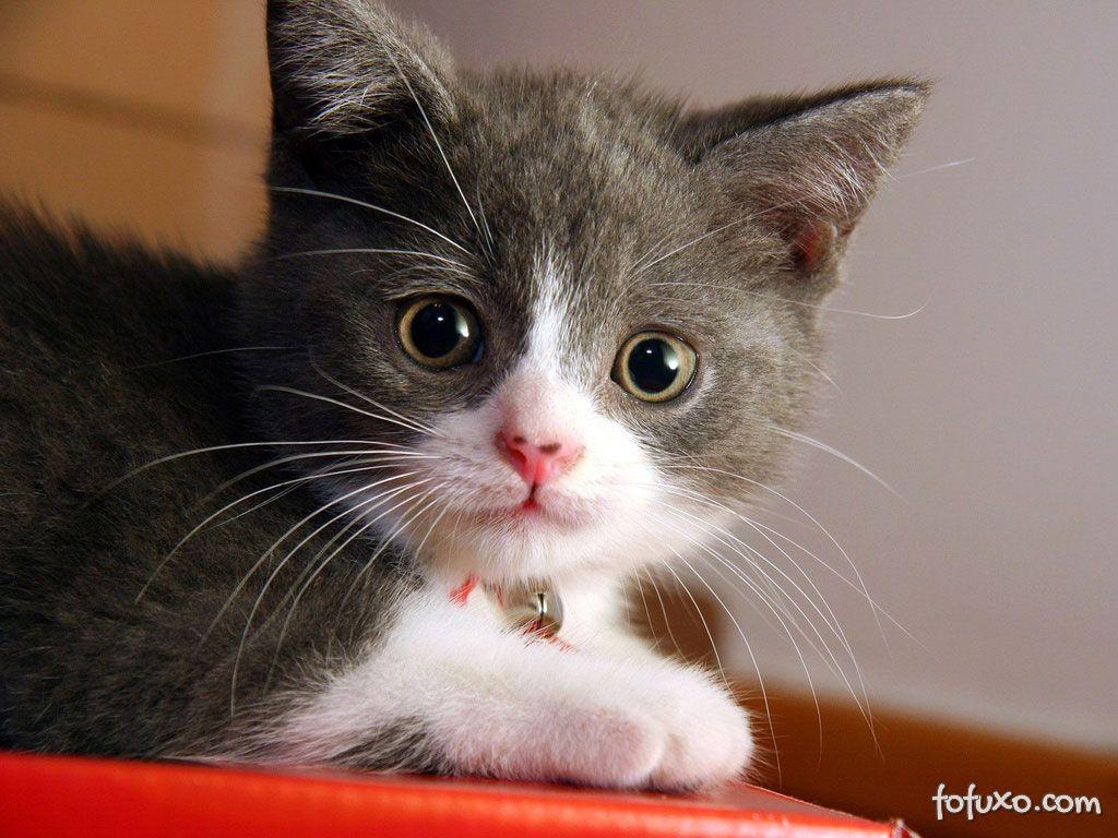 Gato jovem