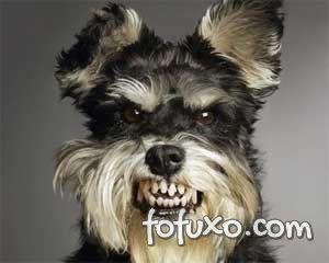 Rosnados geralmente indicam que o cão esteja brabo.