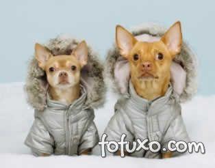 Roupas para cães é fundamental no inverno.