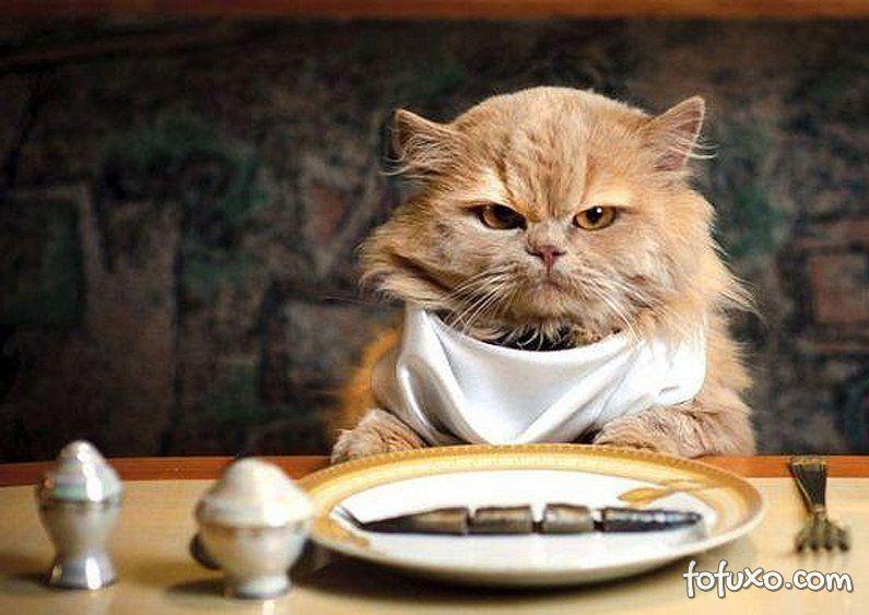 Gatos devem ter uma alimentação variada.