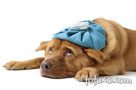 Cachorros resfriados podem ter febre.