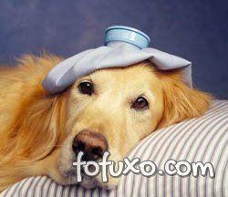 Aqueça seu cão para que ele fique longe do resfriado.
