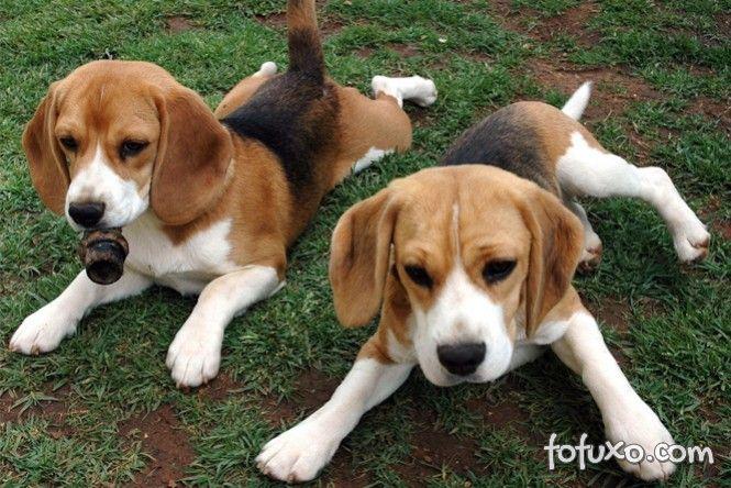 Cachorros são alugados na Coreia do Sul.