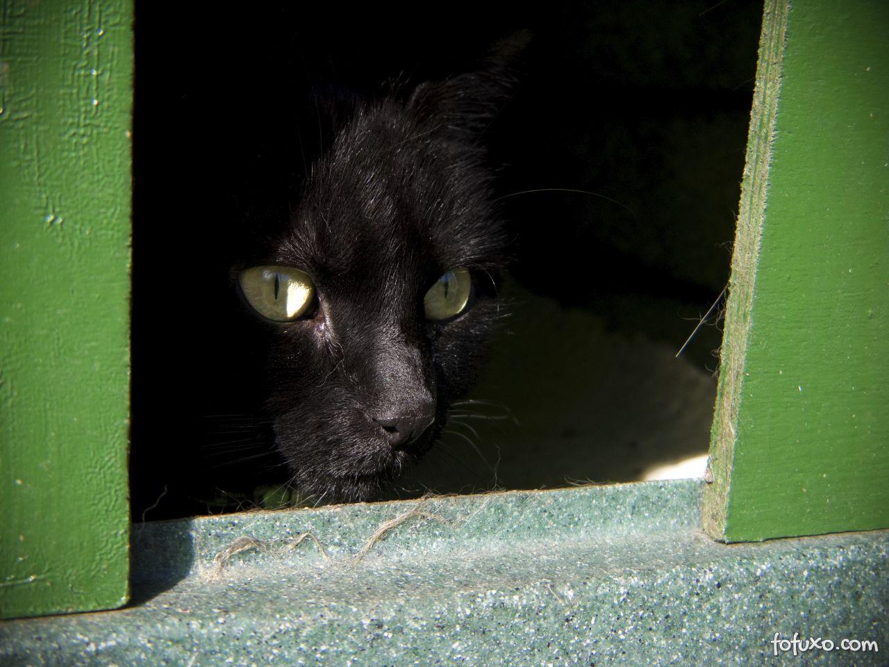 Gatos com medo devem ser tratados com associação de rotinas positivas.