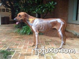 Quiropraxia cachorro