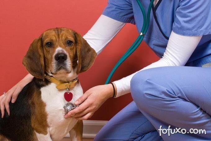 Doenças do coração acontecem com cães e gatos.