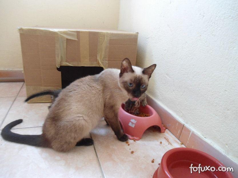 Dicas para cuidar de gatos em gestação