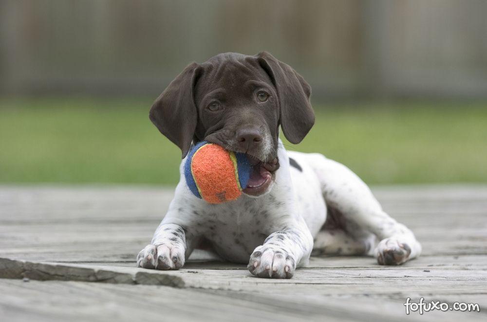 Porque os cachorros roem?