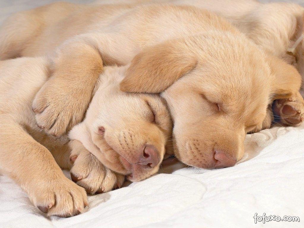 Com o que sonham os cães e gatos?
