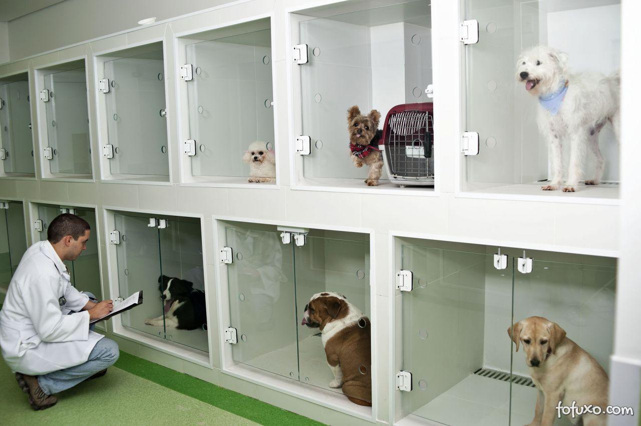Hospitais veterinários de primeira