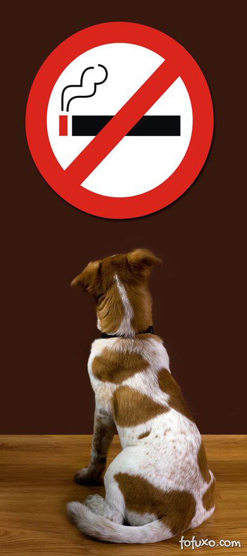 Cigarros e cachorros