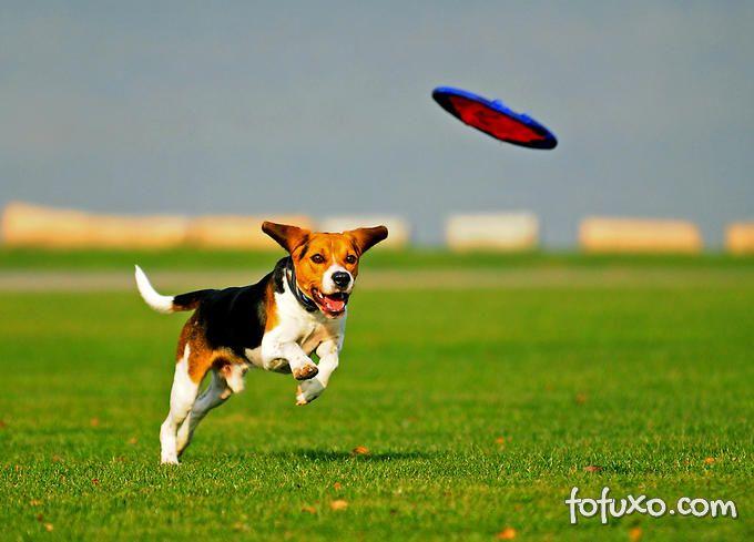 Brincando com o seu cão: Frisbee