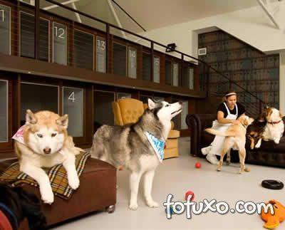 Hoteis para cães