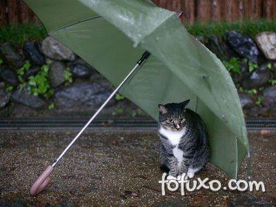 Dias de chuva devem gerar cuidados redobrados com o seu pet