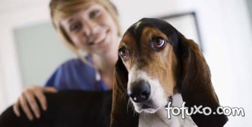 Dicas para contornar o medo do veterinário