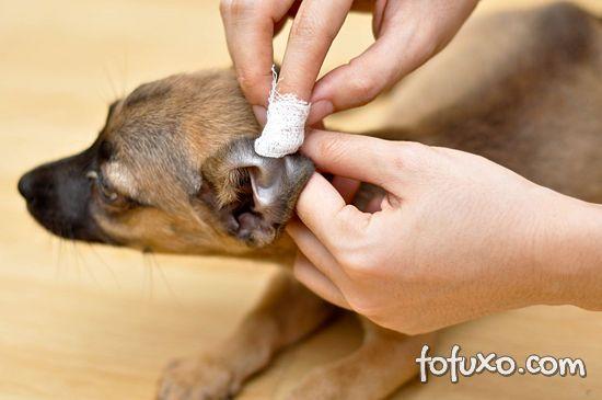 Dicas para limpar as orelhas do seu cão