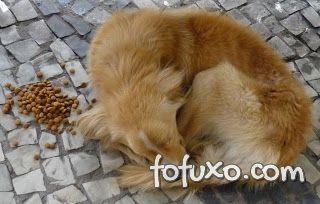 Depressão Canina