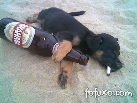 Problemas ao dar bebida alcoólica para os cachorros