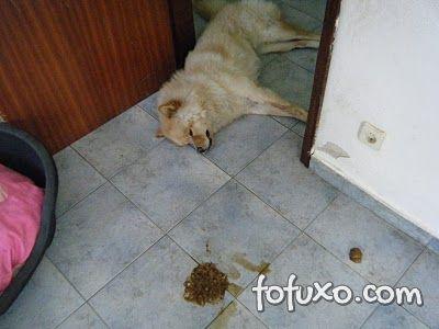 Dicas para saber quando o cachorro está envenenado