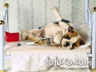 Saiba quais são os acidentes domésticos mais comuns entre os animais domésticos