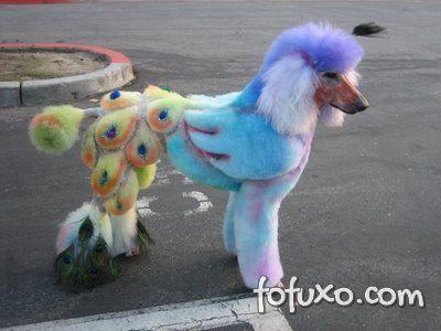 Salvador proíbe tintas para colorir animais