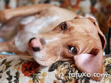 Motivos para não deixar o seu cão sozinho