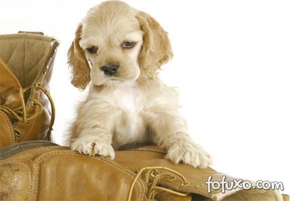 Saiba mais sobre os novos seguros feitos para animais de estimação