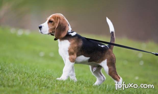 Dicas para um passeio mais tranquilo com o seu cão