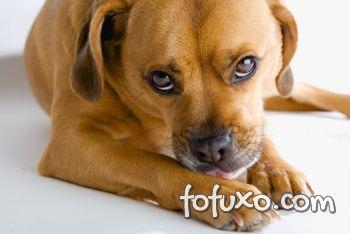 Cachorros que não param de se lamber