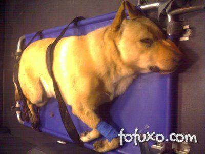 São Paulo poderá ter serviço de ambulâncias para cães e gatos