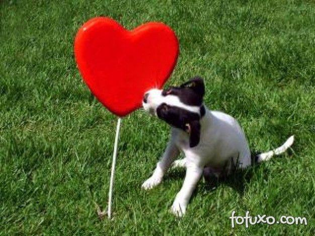 Problemas cardíacos estão entre as maiores causas de morte dos animais doméstico