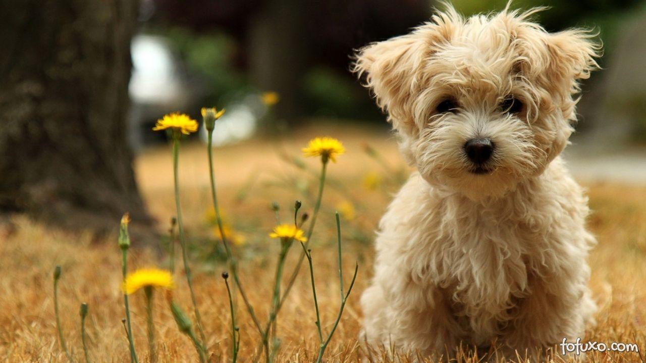 Confira os riscos que a primavera pode trazer para os seus cães