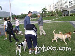 Cuidados e dicas na hora de deixar o seu cão brincar sem o guia