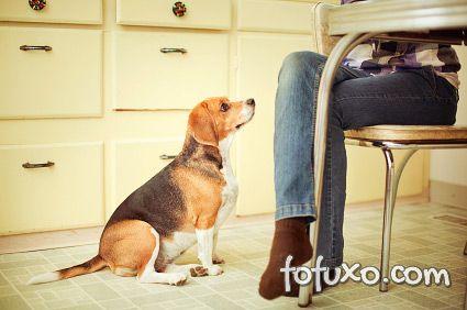 Dicas de como fazer o cachorro olhar para o seu dono