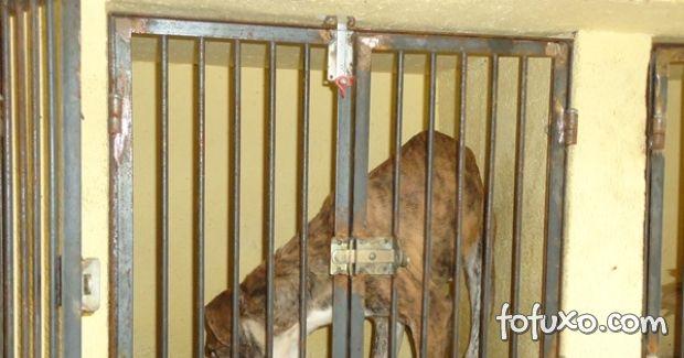Cães são retirados de clínica em BH