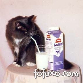 Saiba mais sobre a relação entre gatos e leite