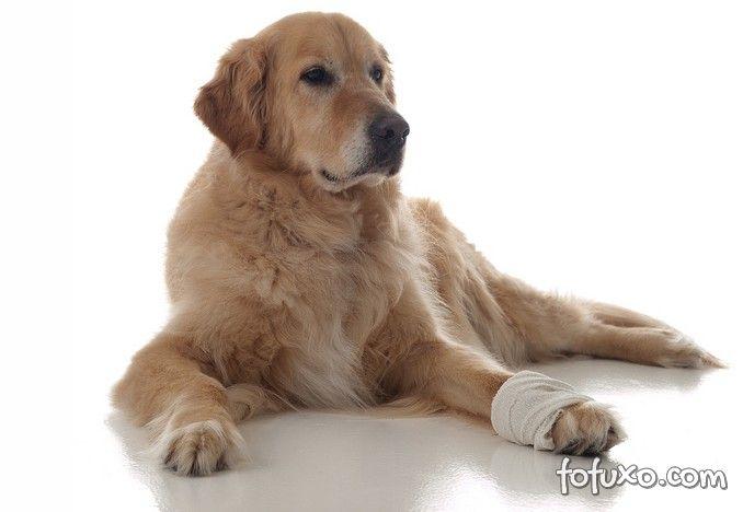 Dicas para transportar um cão machucado