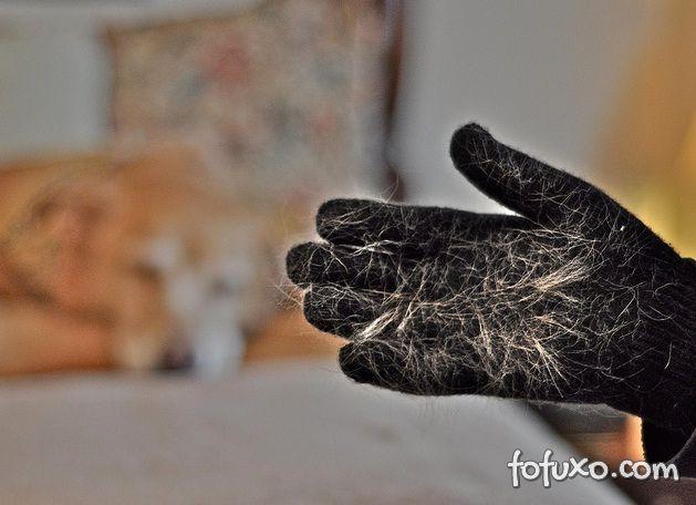 Saiba como tratar as quedas de pelo nos cães