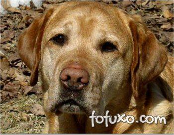 Saiba mais sobre o nariz rosa dos cães