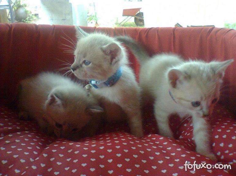 Dicas para quem quer adotar um gatinho