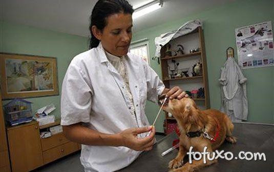 Teste de DNA identifica cocô de cachorro deixado no chão