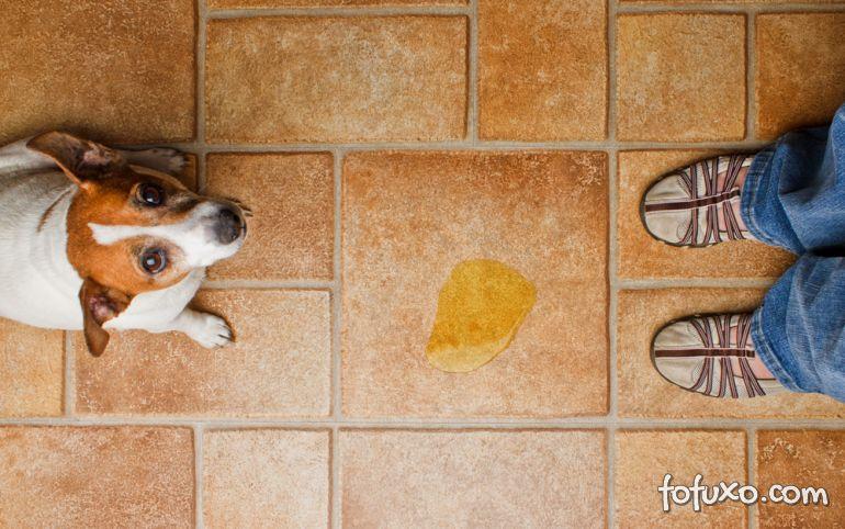 O que fazer quando o cachorro adulto não para urinar na casa inteira?