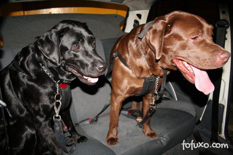 Saiba mais sobre os cintos para cachorros