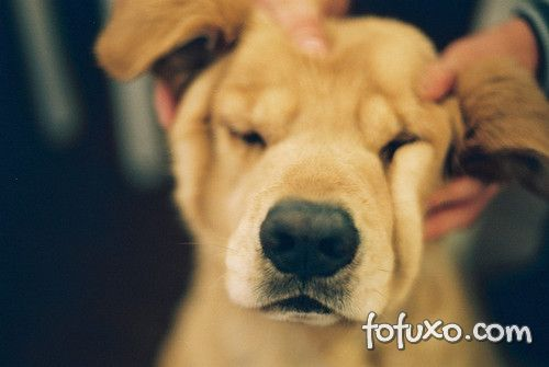 Cachorros bipolares, eles existem?