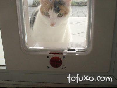 Criando caminhos alternativos para os gatos
