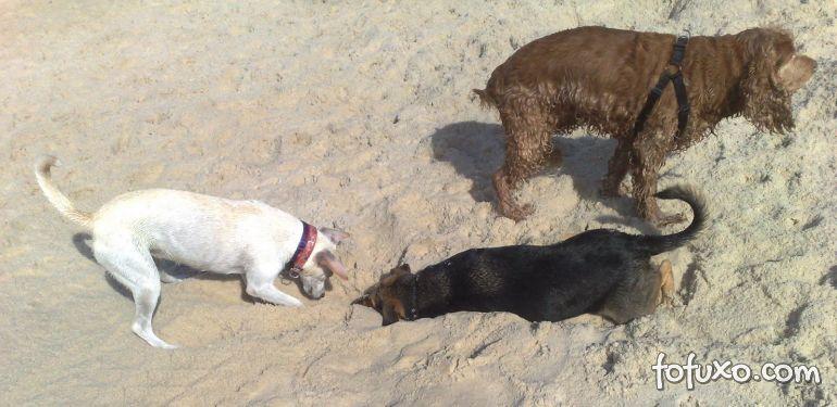Dicas para que o seu cão não cave buracos