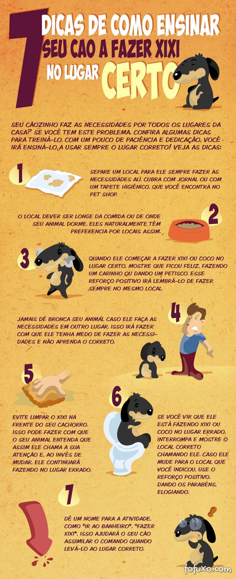7 dicas de como ensinar seu cão a fazer xixi no lugar certo