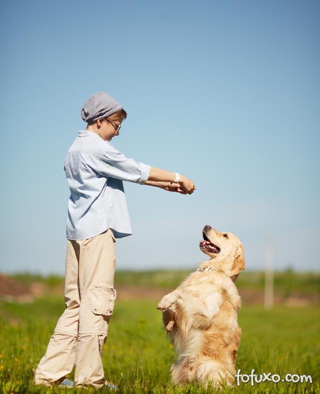 Dicas para lidar com cachorros teimosos