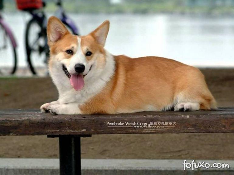 Cachorros preferidos da Rainha Elizabeth II estão em extinção