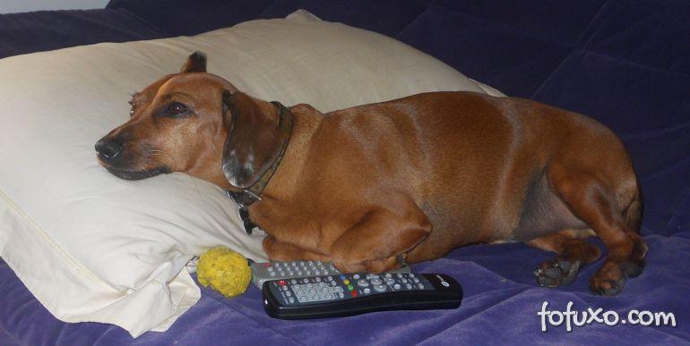 Televisão pode fazer mal para os cachorros?